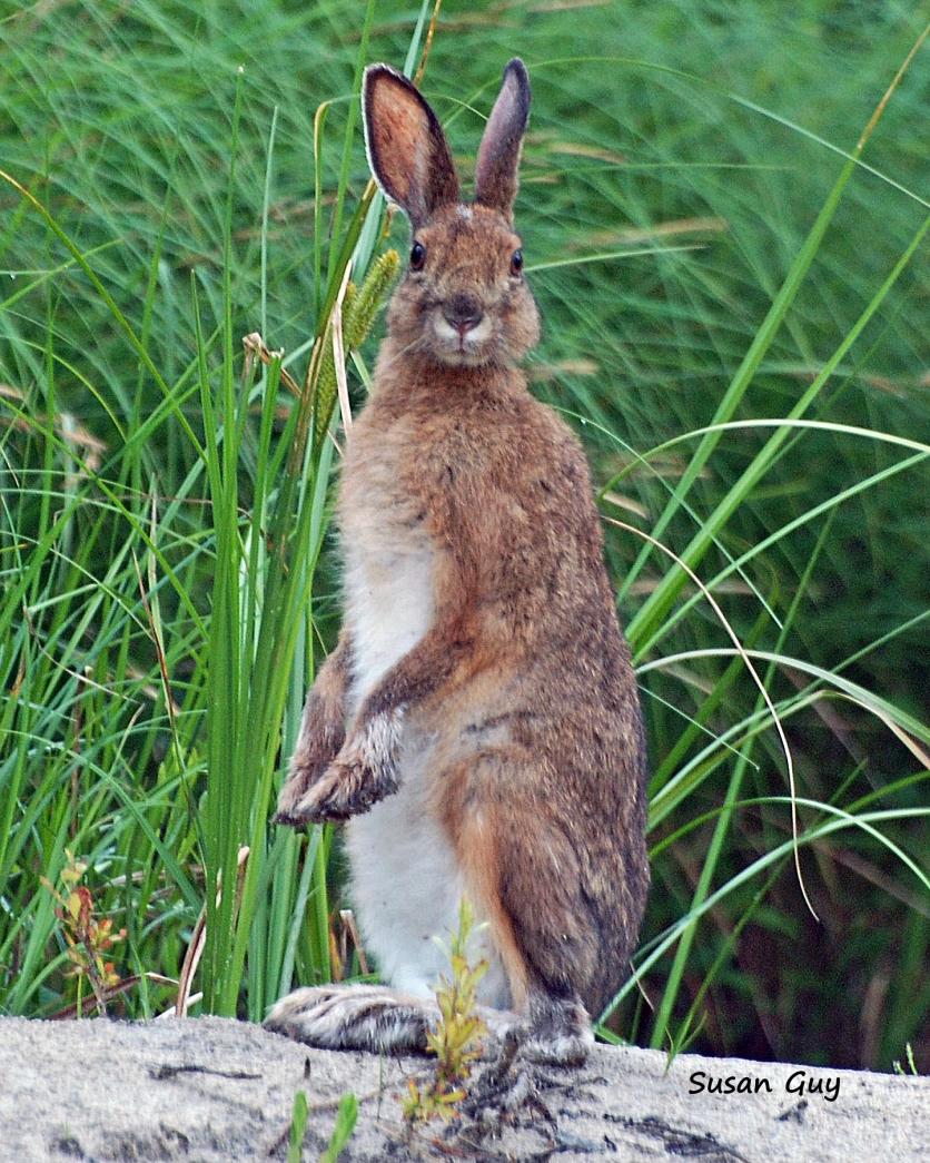 bunny-standing-sig