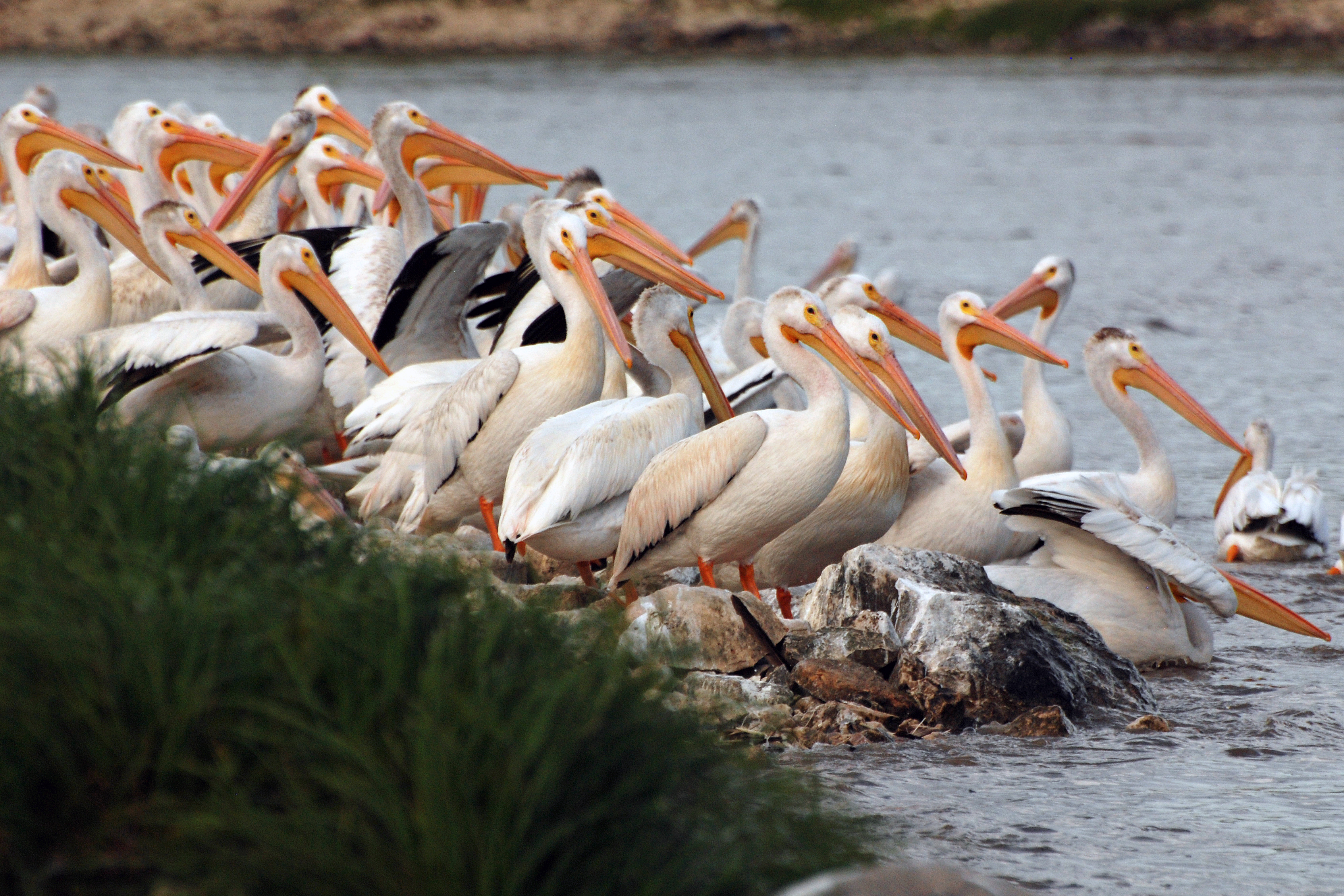 pelican-group-wp