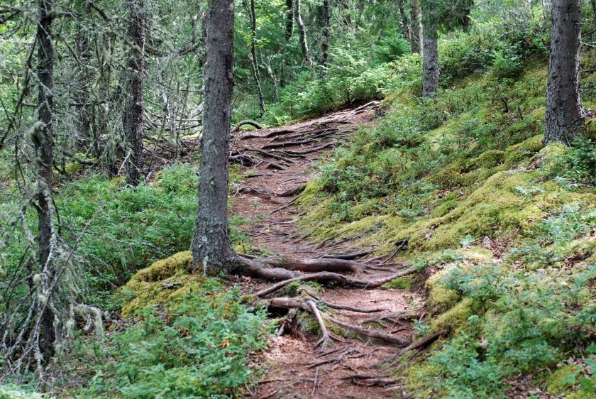 pukaskwa-trails