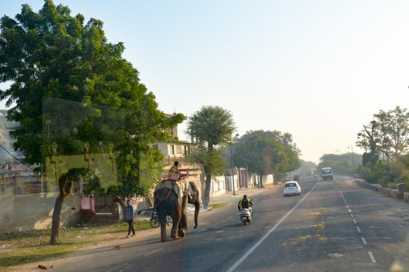 India D7100 -1060_994