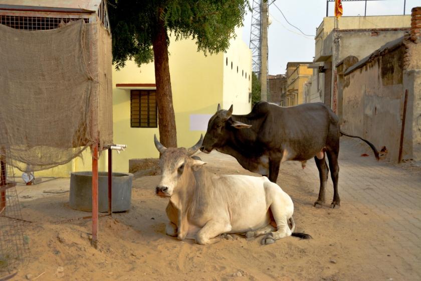 India D7100-1350_1177