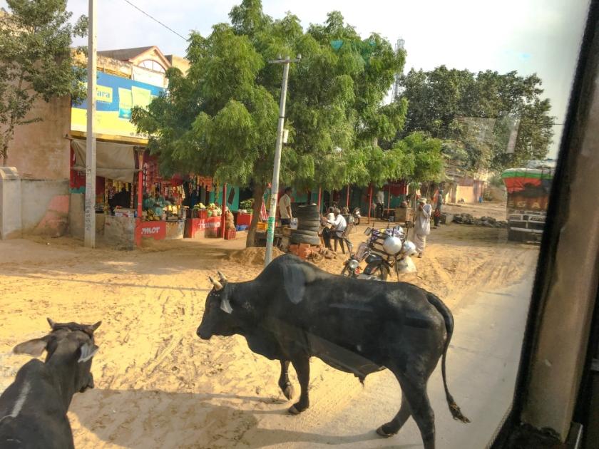 India IPhone-262_1182