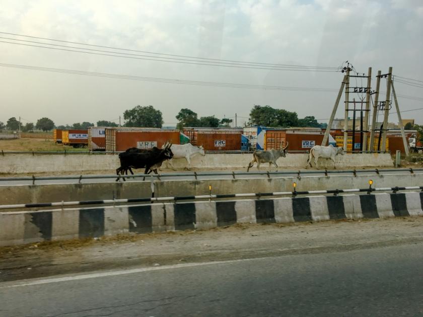 India IPhone-336_1202