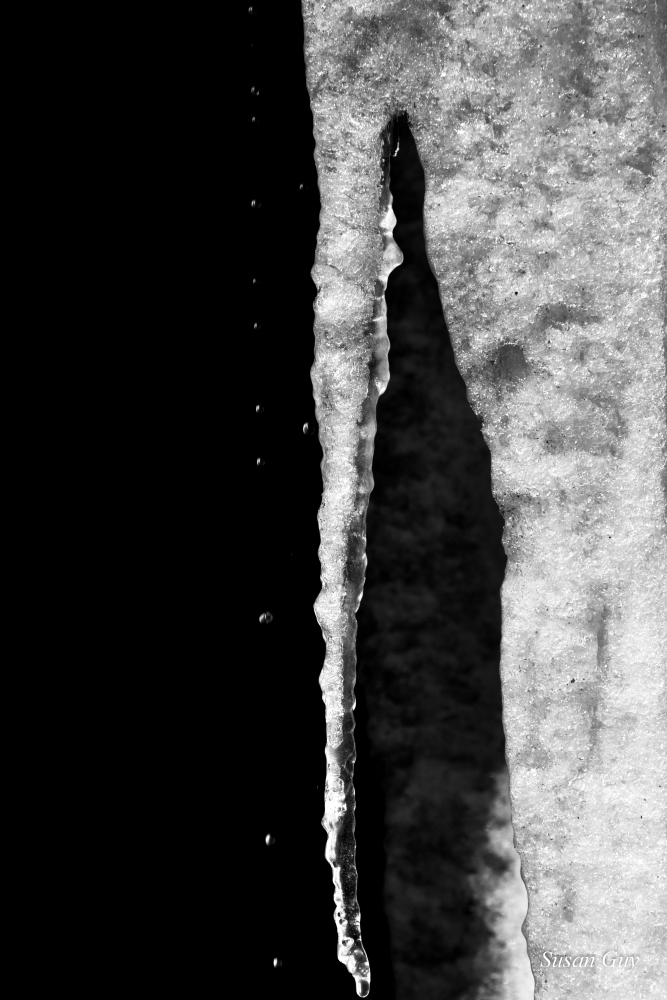 Icicle by Susan