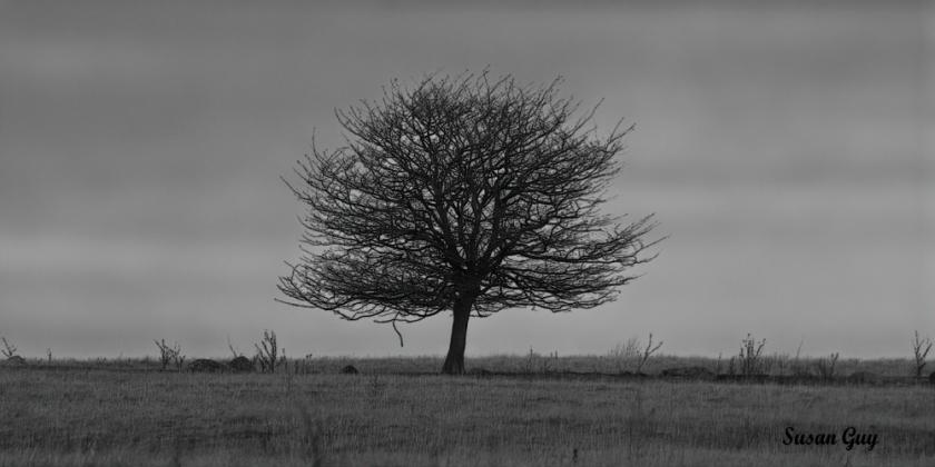 tree BW_1642