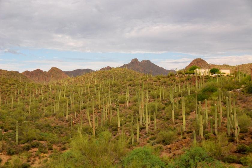 LR Exported Tucson AZ-56