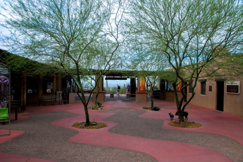 LR Exported Tucson AZ-58
