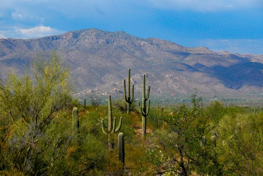 LR Exported Tucson AZ-8