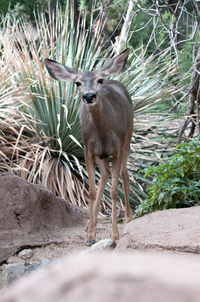 Tucson-24_01