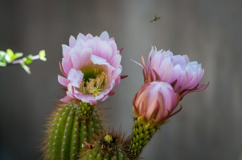 Tucson-33_01