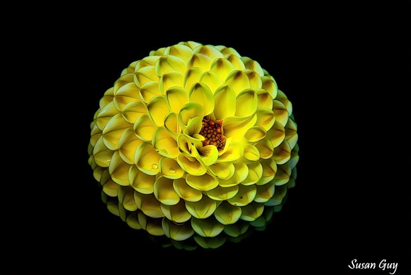 Victoria BC flower